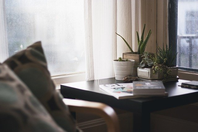 house plants to brighten up the dorm